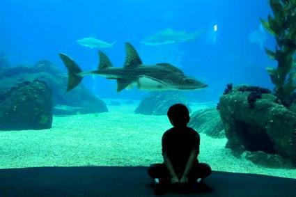 oceanario lisboa_mini