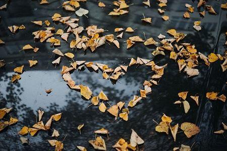 folhas no chão em forma de coração