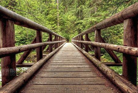 trilho de ponte em perspetiva, rodeado de árvores